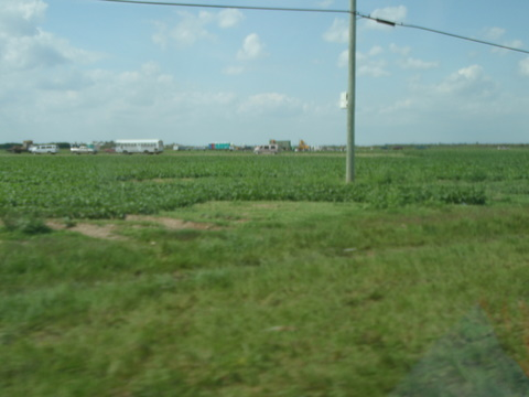 On our way to the Everglades near Homestead, veggie pickers