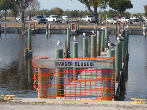 Seagulls, no parking left