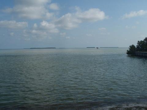 Florida Bay, Flamingo