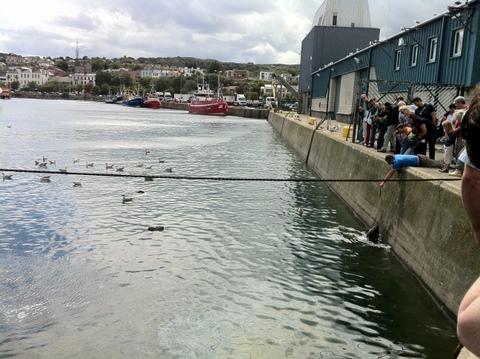 Man feeding the seals