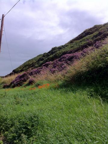 Purple Heathers were everywhere on the trail