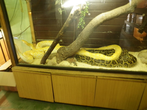Reptile Haven, Temple Bar