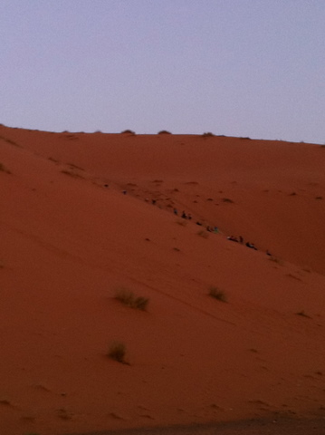 The colors of the sands of the Erg Chebbi are amazing