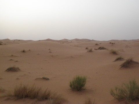 There is little vegetation in the Erg Chebbi