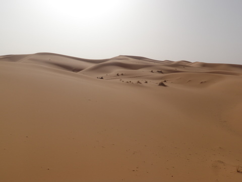 The Sahara is vast, we need Berber guides