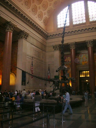 Inside the American Museum of Natural History in New York