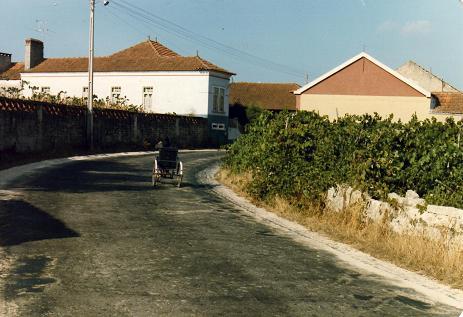 Man in a special wheel-chair bike in Serredade
