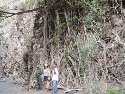 Our armed guard, Tara and Jackson in front of a fig tree roots