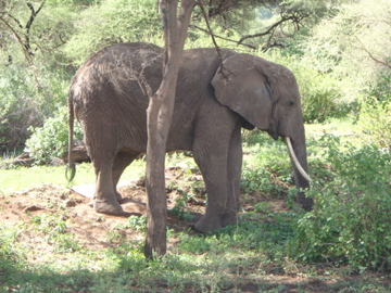 Our first sighting of elephants in Africa
