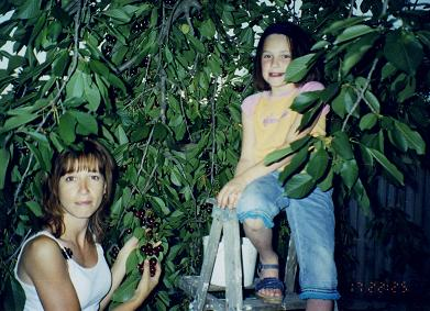 Nadia picking cherries with auntie Ginette, Kelowna