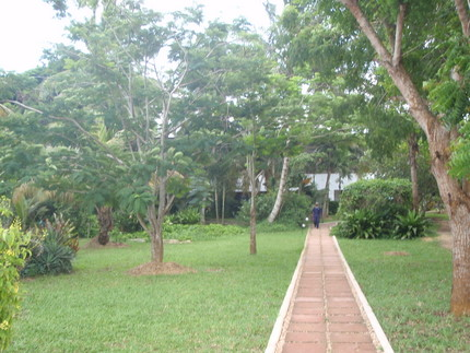 Pathway and little tropical forest leading to our room