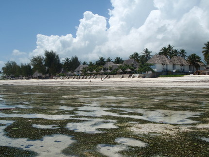 The resort from the ocean during low tide